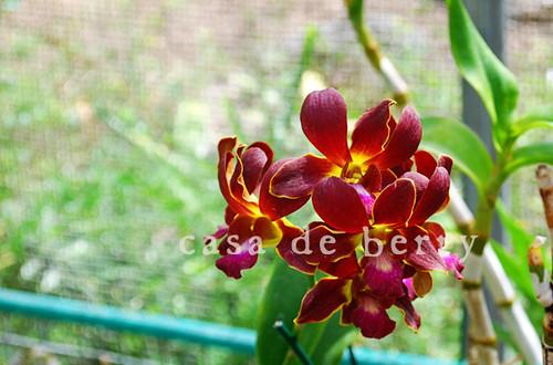 orchids8 copy