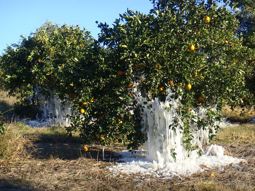 iced-oranges