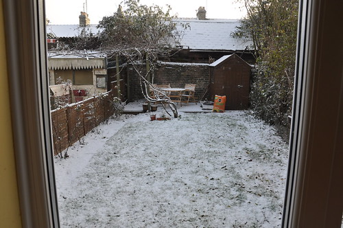 Our Frosty Backyard