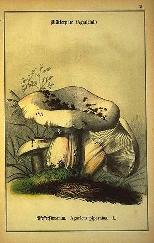 010-Allgemein verbreitete eßbare und schädliche Pilze 1876- Wilhelm von Ahles