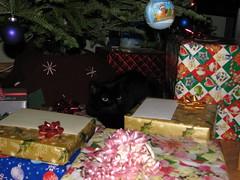Sasha Under the Tree (s.kosoris) Tags: christmas holiday tree cat blackcat kitty christmastree sasha christmaseve s3is canonpowershots3is skosoris