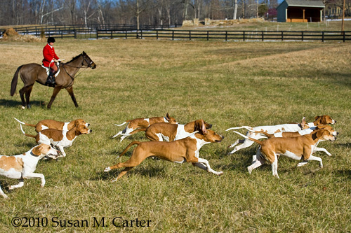 foxhunting, horse, Old Dominion Hounds