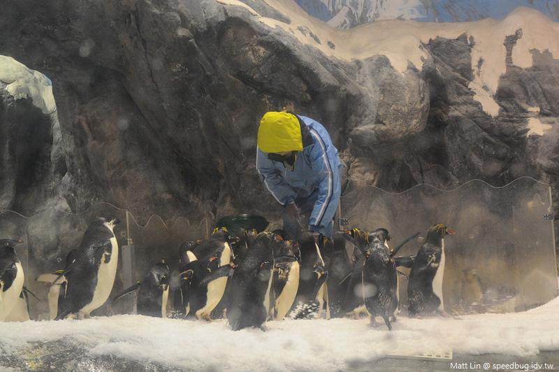 海生館企鵝餵食 (2).jpg
