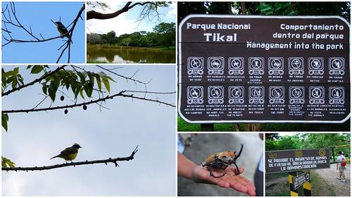 提卡爾金字塔Tikal2