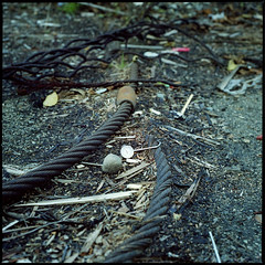 Ground temp (dirtmerchantrmx) Tags: canada abandoned 6x6 film mediumformat cable hasselblad thermometer squamish destroyed carlzeiss 503cx