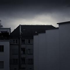 New Year's Conference (gato-gato-gato) Tags: leica windows roof winter house building bird rooftop birds architecture dark schweiz switzerland suisse fenster gull gulls zurich sunday haus rangefinder m v architektur zrich svizzera vgel mwe dach gebude sonntag mwen neujahr altstetten dunkel vogel m9 dachspitze zurigo giebel albisrieden dster outdoorphotography urbanstructures kreis9 gatogatogato leicasummiluxm50mmf14asph leicam9 gatogatogatoch wwwgatogatogatoch