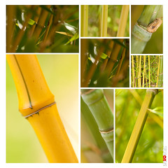 Bamboo Montage (BigRedTroll) Tags: bamboo foliage green montage nature plant