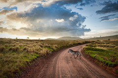 A sunset walk (samthe8th) Tags: africa tanzania nikon sam pair scene ngorongoro crater zebra serengeti zebras topaz 2470 matchpointwinner d700 flickrchallengegroup flickrchallengewinner ultraherowinner thepinnaclehof kanchenjungachallengewinner storybookwinner tphofweek91 matchpointtournamentwinner mpt210