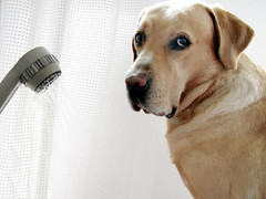 Patience and forbearance (dangeri.away) Tags: loving labrador athome dee doc gettyimages musetto thelittledoglaughed heismylove doggielife miocucciolo heismyangel gettyimagescontributor magicunicornverybest magicunicornmasterpiece myyellowlabrador ldlportraits hehasanadorablesnout