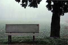 L'attesa (waiting) (mat56.) Tags: tree misty fog bench landscapes waiting nebbia albero paesaggi lombardia attesa cremona pianura panchina padana mat56 roncadello