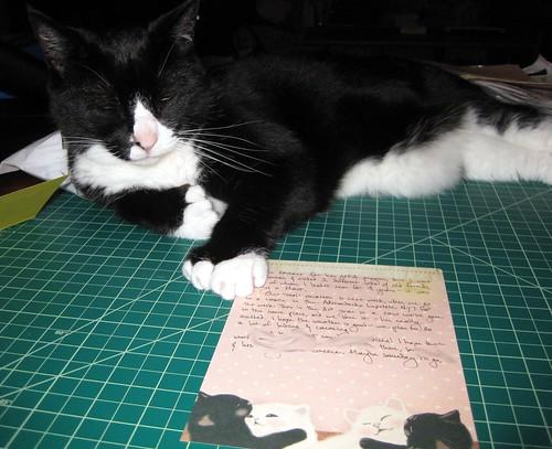Feline letter queen