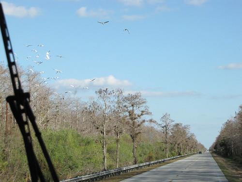 Drive to Islamorada-5