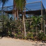 20101225_BZE Zoo_King Vulture_1602-2-2.jpg thumbnail