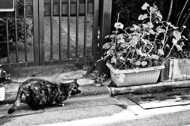 Today's Cat@2011-01-10