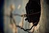 Inquilinato X (alejocock) Tags: poverty casa colombia photographer colombian vieja ruina medellin detalles pension pobreza urbanfragments lovaina acock lavadores alejocock httpsurealidadblogspotcom alejandrocock inquilinato decarrosacockalejocockcolombiamedellinalejandrocockcasacolombianhttpsurealidadblogspotcomphotographerpobrezaruinavieja