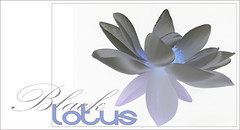 Black Lotus - Black-Lotus-53 (Bahman Farzad) Tags: black flower macro yoga design peace lotus relaxing peaceful meditation therapy lotusflower lotuspetal blacklotus lotuspetals lotusflowerpetals lotusflowerpetal