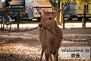 Iron chewing deer with captions