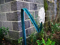 How? (BACKYard Woods Explorer) Tags: abandoned weeds signpost abandonedbuildings casinosupplywarehouse bloggedontuppy