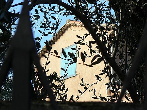 derrière l'olivier.jpg