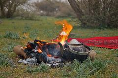 Firewood- Explore Front Page (TARIQ-M) Tags: wood tree picnic desert tea pot teapot saudiarabia firewood app coffeepot  canonefs1855        canon400d  gsbviva   tariqm tariqalmutlaq kingofdesert 100606169424624226321postsnajd12sa