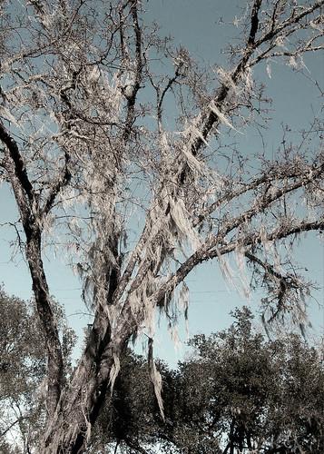 Whispering Tree 3.2