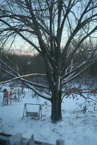 Southern Oak at sunset