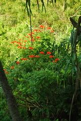 DSC_0284 (johnhane) Tags: temp park travel outdoors hawaii flora january delete hike trail kauai kalalau napali napalicoast 2011 kalalautrail haenastatepark