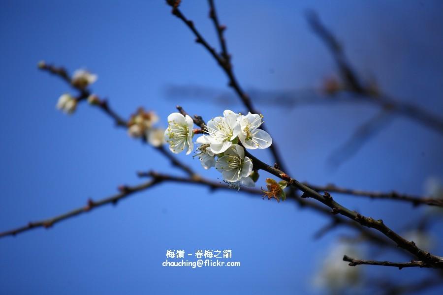 梅嶺春韻900x600_IMG_0716