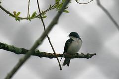 bird 076
