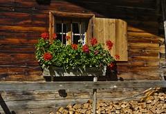 Window and flowers ... (Kat-i) Tags: gemeindevomp tirol sterreich fenster window blumen flowers geranien holz wood almhtte hut chalet austria tyrol eng nikon1v1 kati katharina 2016