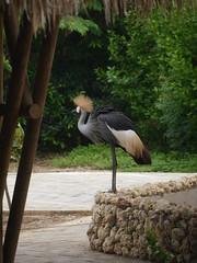 P2230220 (Gareth's Pix) Tags: aviarionacionaldecolombia baru colombia aviario bird