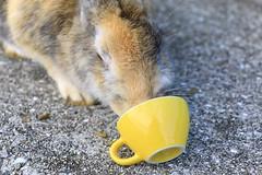 image (Rubia.A) Tags: 兎 うさぎ 大久野島 広島 rabbit rabbitisland okunoisland japan hiroshima