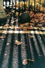 Barred (dichohecho) Tags: orange brown color film leaves tarmac analog concrete grey sunny analogue pentaxmesuper railings doubleyellowlines fujisuperiaxtra400 roll23 colourprintfilm dichohecho