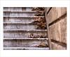 Melancolía (Media_Mirada) Tags: autumn stairs otoño escaleras eos450d canonef28105mmf3545usm