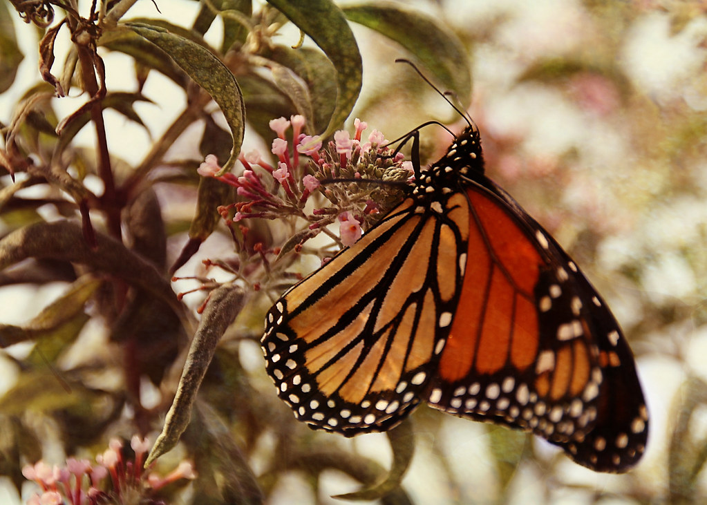 butterflywithtexture