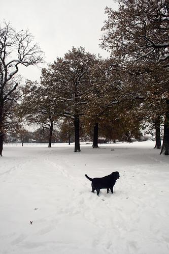 Snow-Nov_10_14