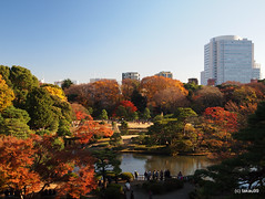 Rikugien Gardens, Japan (_takau99) Tags: trip travel vacation holiday topv111 japan gardens pen garden tokyo december olympus autumnleaves   sengoku 2010 rikugien  komagome   takau99 penlite   rikugiengardens epl1  gettyimagesjapanq1