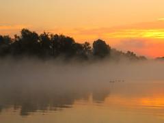 der Rhein (izoll) Tags: wasser nebel outdoor fluss rhein sonnenaufgang spiegelung spiegelungen ruhe derrhein sonnenaufgnge heidenfahrt nebelstimmung izoll nebeldunst