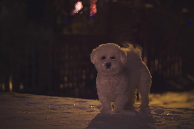 snow puppy 340/365