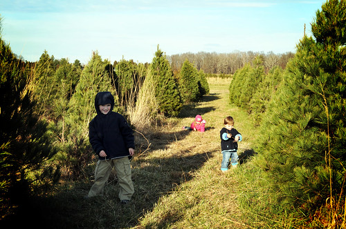 the kids_tree farm