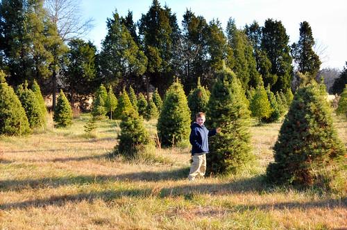 tristan_tree farm