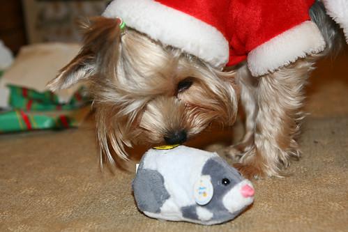 101210 Jezzy's Christmas Present