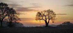 Sun on the horizon (yvonnepay615) Tags: uk trees sunset sky nature clouds landscape lumix ngc norfolk silhouettes panasonic g1 45mm eastanglia coth concordians coth5