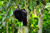 Ilha Grande: bird in the garden