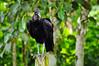 Ilha Grande: bird in the garden
