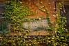 Cornice (the_lighter) Tags: windows rome roma foglie nikon centro cornice finestre d60 edera pianterampicanti viadiseustachio