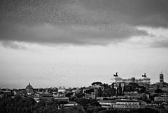 il volo libero (the_lighter) Tags: bw rome roma birds nikon uccelli bianconero giardino citt stormi aranci altaredellapatria d60 cupo