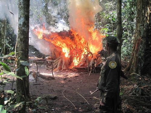 burning poachers camp