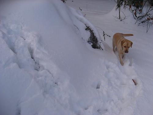 Danio et la neige