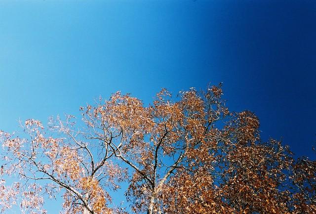 tree and 2 tone sky